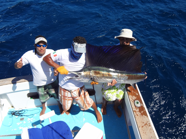 papagayo sailfish fishing on board tuna fish